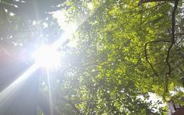 Nắng nóng gay gắt có thể kéo dài trong nhiều ngày tới