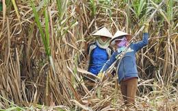 Gian lận thương mại từ Thái Lan khiến ngành đường Việt Nam rơi vào tình trạng báo động?