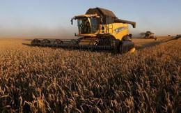 VDSC: Bức tranh ngành nông nghiệp Việt Nam khá u ám