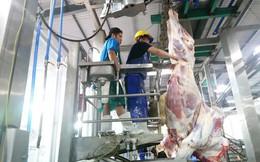 Thông tin thêm về vụ 1.600 con trâu bò Úc mất dấu tại Việt Nam