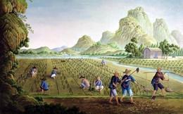 Dành nửa đời người trồng dưa thần, 2 anh em nhận về kết quả chẳng ai giống ai: Người biết đặt nền móng thành công nhất định sẽ có phẩm chất này!