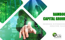 Bamboo Capital: 6 tháng lãi 97 tỷ đồng cao gấp 4 lần cùng kỳ