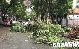 Ảnh: Bão số 2 quần thảo Đồ Sơn, quật đổ hàng loạt cây xanh ở Hải Phòng