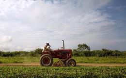 Người nông dân Mỹ vẫn 'một lòng một một dạ' với Tổng thống Trump
