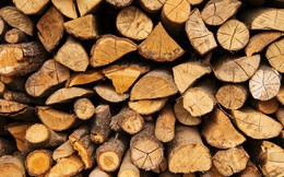 Xuất khẩu gỗ tăng mạnh nhờ hưởng lợi Tradewar, cổ phiếu Phú Tài (PTB) lên mức cao nhất trong vòng 1 năm