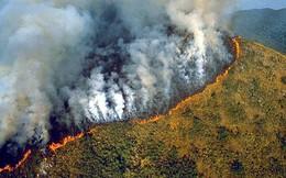 Thảm họa cháy rừng Amazon: Tất cả những gì bạn có thể nhìn thấy là cái chết