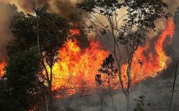 Video: Đau xót cảnh rừng rậm Amazon đang bị 'bà hỏa' nuốt dần