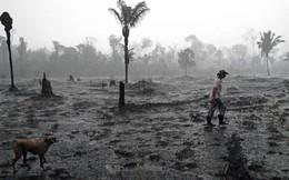G7 chi 20 triệu USD cứu cháy rừng Amazon, Brazil thẳng thừng từ chối kèm những lời mỉa mai