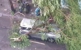 Mưa giông dữ dội từ cuối chiều ở Hà Nội, 1 nam thanh niên bị cây si đổ trúng tử vong