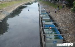 Chuẩn bị thả cá Koi Nhật và cá chép Việt xuống sông Tô Lịch và Hồ Tây