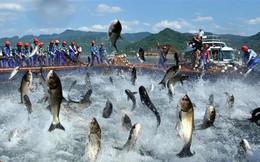 Thủy sản Nam Việt (ANV) đẩy mạnh xuất khẩu vào Trung Quốc, lãi sau thuế 9 tháng ước đạt 510 tỷ đồng