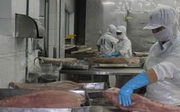Thẻ vàng thủy sản ảnh hưởng lớn đến xuất khẩu của doanh nghiệp