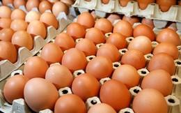 Giá trứng gia cầm bất ngờ tăng trở lại sau một thời gian dài giảm sâu
