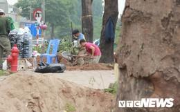 Ảnh: Công nhân gấp rút di dời hơn 400 cây xanh trên phố Thủ đô trước Tết Nguyên đán