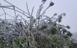 Vì sao Mẫu Sơn là nơi lạnh nhất Việt Nam?