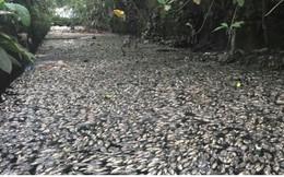 Ảnh: Kinh hoàng cá chết phủ kín cả con kênh giữa TP Vinh