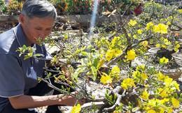"""Nông sản rớt giá, các nhà vườn giảm giá bán """"chạy"""" hoa kiểng"""