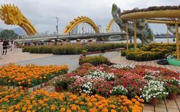 """Cầu Vàng """"đọ dáng"""" cầu Rồng ở đường hoa bên bờ sông Hàn"""