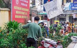 Quất, đào 'đại hạ giá' tràn ngập phố Hà Nội ngày 30 Tết