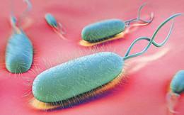 Ung thư dạ dày có thể âm thầm phát triển nếu dạ dày của bạn chứa nhiều loại vi khuẩn gây hại này