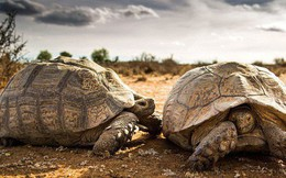 Chuyên gia: 3 đặc điểm giúp rùa trở thành loài sống thọ nhất thế giới mà con người nên học