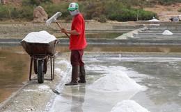 Muối được mùa, được giá ở Ninh Thuận