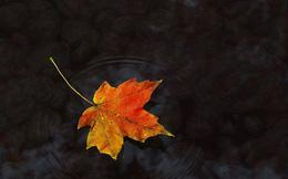 Điều trị tâm linh cho bệnh nhân ung thư - P2: Một chuyến du xuân