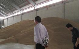 Kiến nghị không tái xuất lúa mì nhiễm cỏ kế đồng
