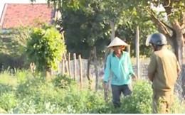 """Phú Yên: Nông dân thu hoạch dưa phải """"làm luật"""""""