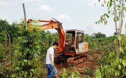 """Người trồng tiêu, cà phê lỗ nặng vì bị... """"bẻ kèo"""""""