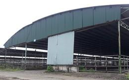 Dự án chăn nuôi hơn 254.000 con bò của Cty Bình Hà: Không còn 1 con bò
