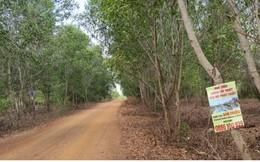"""""""Cò đất"""" không còn tung hoành ở khu vực dự án Sân bay Phan Thiết"""
