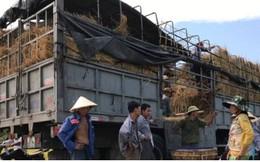 Quảng Nam: Dưa hấu được giá, nông dân phấn khởi