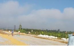 Tiền Giang: Giá lúa gạo tăng mạnh, thương lái dự trữ lãi cao