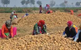 """PepsiCo kiện 4 nông dân Ấn Độ vì trồng giống khoai tây """"độc quyền"""""""