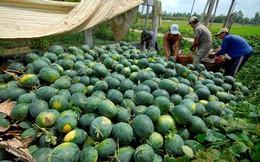 Nâng cao chất lượng nông sản Việt, mở cánh cửa vào thị trường Trung Quốc