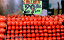Áp thuế cao đối với cà chua, Mỹ gây căng thẳng thương mại với Mexico
