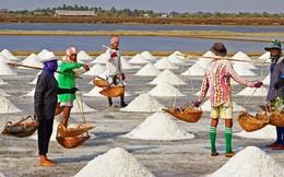 Muối được mùa được giá, diêm dân phấn chấn