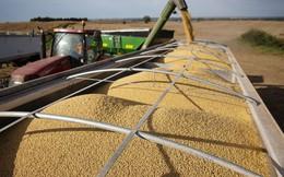 Ông Trump chi thêm 15 tỷ USD giúp nông dân Mỹ vượt chiến tranh thương mại