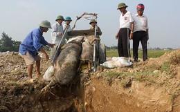Dịch tả lợn châu Phi gây thiệt hại khoảng 3.600 tỷ đồng