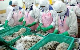 Trung Quốc tăng nuôi tôm, Việt Nam vẫn có cơ hội xuất khẩu lớn