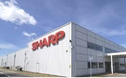 Sharp lên kế hoạch chuyển thị trường từ Trung Quốc sang Việt Nam