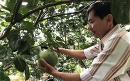 Trái cây vụ hè 2019: Thương lái tranh nhau 'săn' hàng
