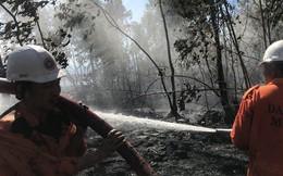 Cháy lớn trên bán đảo Sơn Trà, hơn 8 hecta rừng bị thiêu rụi