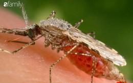 Ký sinh trùng sốt rét kháng thuốc lây lan nhanh khắp Đông Nam Á, chuyên gia cảnh báo chủ động phòng bệnh