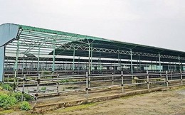 Thông tin mới dự án nuôi bò 4.500 tỉ phá sản liên quan ông Trần Bắc Hà