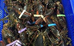 Giật mình tôm hùm Alaska giá nhập về Việt Nam chỉ 170 ngàn/kg, rẻ hơn tôm tép đồng
