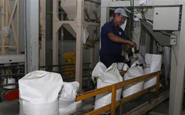 Giá gạo của Việt Nam giảm vì lo ngại Philippines hạn chế nhập khẩu