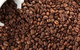 Cung vượt cầu, giá cà phê nội địa tiếp tục giảm sâu