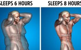 Giả sử mỗi ngày bạn được ngủ 8 tiếng, đây là những gì sẽ xảy ra